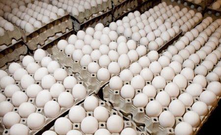 فروش تخم مرغ فله از اول بهمن در مشهد ممنوع شد