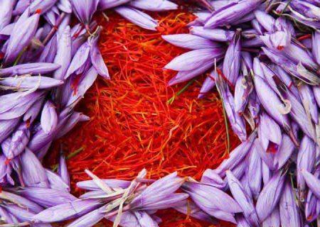 نباید اجازه داد کشورهای دیگر برای زعفران ایرانی قیمت تعیین کنند