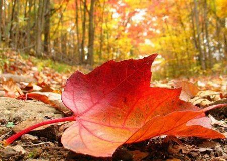 تداوم روند کاهش دمای هوا در خراسان رضوی
