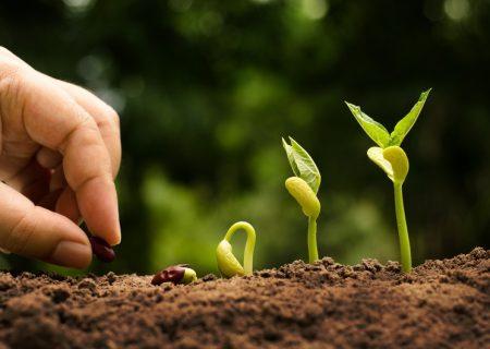 نقش قابلتوجه بخش کشاورزی در تولید ناخالص داخلی و صادرات کشور